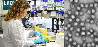 """Universidad Nacional de Educación a Distancia Curso """"Introducción a la Virología"""" – del 1 de diciembre de 2018 al 31 de mayo de 2019"""